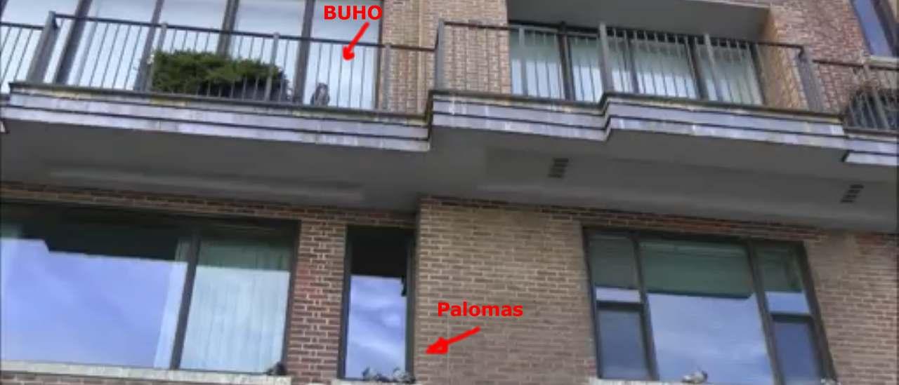 Soluciones para ahuyentar palomas for Ahuyentar palomas del balcon